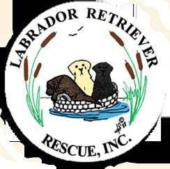 LRR Logo